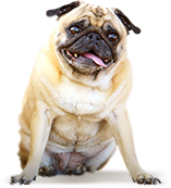 Produkte gegen Zecken bei Hunde