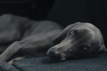 Genesung beim Arthrose Hund