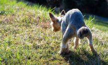 Durchfall bei Hunden bekämpfen