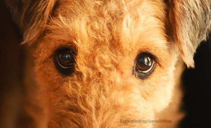 Durchfall Bei Hunden Das Hilft Gegen Magen Darmbeschwerden