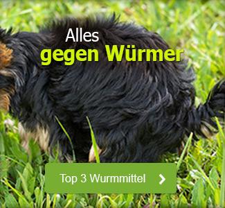 Gegen Würmer beim Hund
