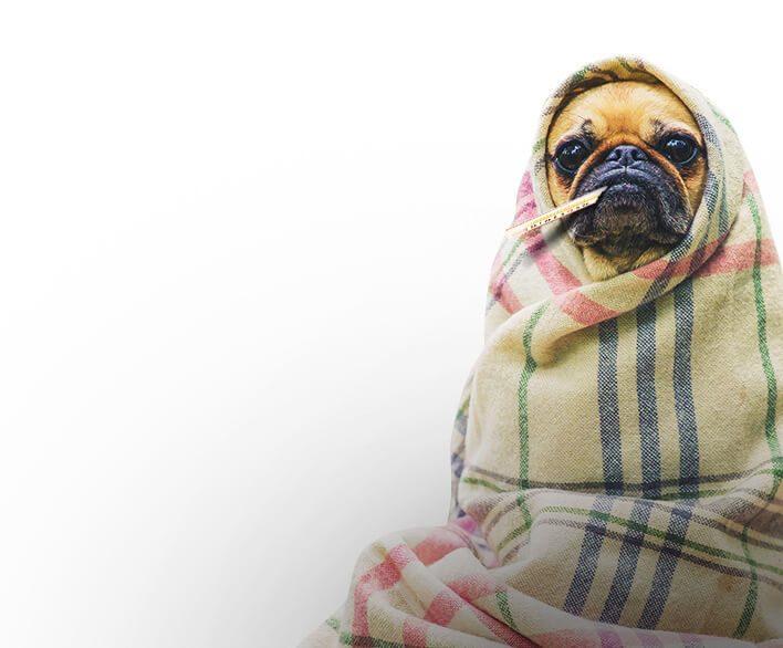 Tipps Gegen Hundekrankheiten Hausmittel Und Ratgeber 2018