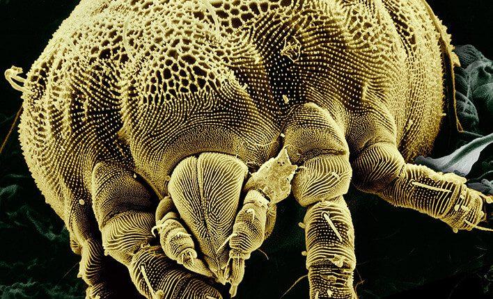 Milbenspray gegen Milben