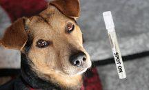 Spot On für Hunde