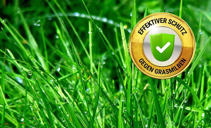 Grasmilben bekämpfen - So gehts