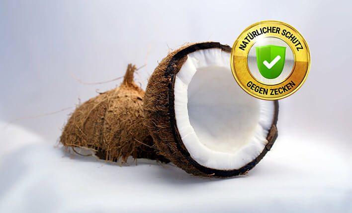 Kokosöl gegen Zecken