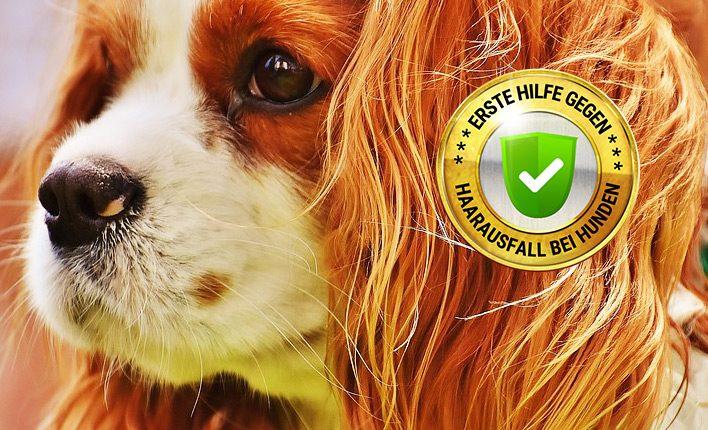 Alles gegen Haarausfall bei Hunden