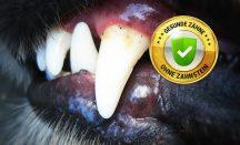 Deinen Hund Zahnstein entfernen