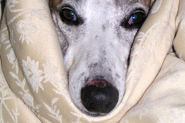 Hund Zahnstein entfernen Folgen