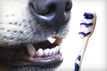 Mundgeruch bei Hunden bekämpfen