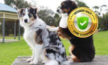 Effektiv Schuppen beim Hund bekämpfen
