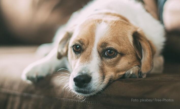 Trockene Haut bei Hunden bekämpfen