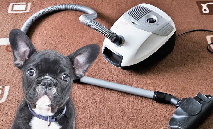 Haarausfall bei Hunden bekämpfen