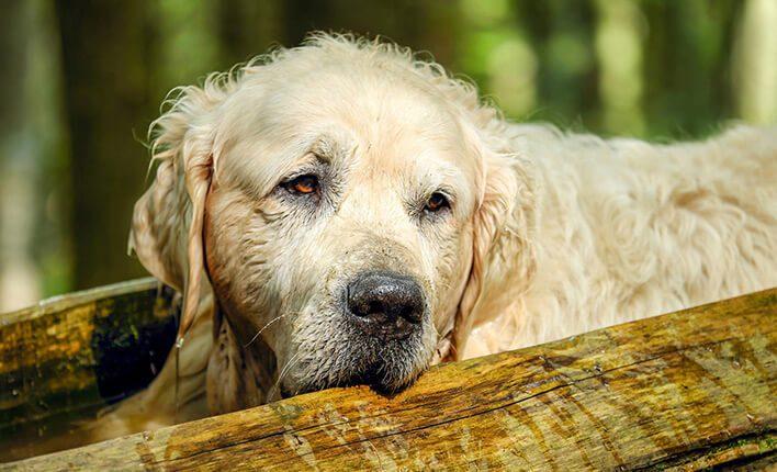 Trockene Haut bei Hunden stoppen