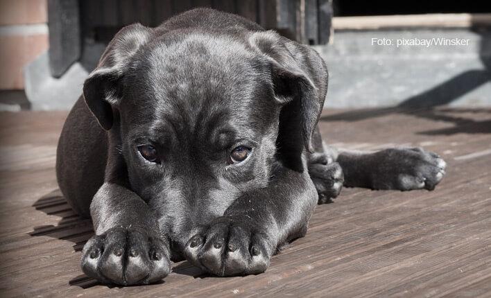 Kohletabletten für Hunde bei Vergiftung