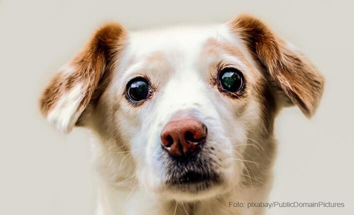 Sodbrennen beim Hund behandeln