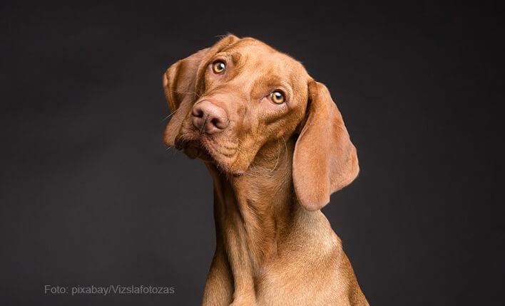 Heilung von Spondylose beim Hund