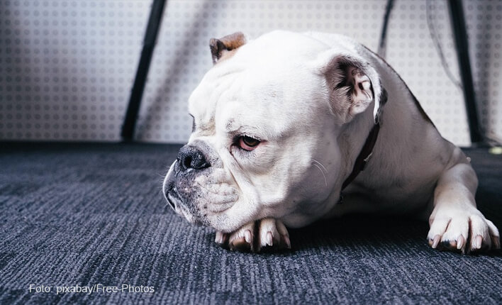 Spondylose beim Hund erkennen und behandeln