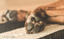 Hundeschuhe als Pfotenschutz für Hunde